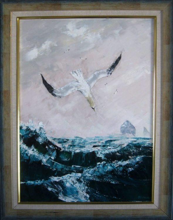 Diving Gannets at St Kilda